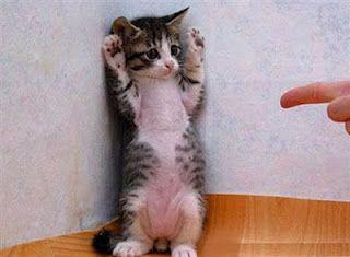 Porque tu gato no usa el arenero? Seguramente tiene una razón…,