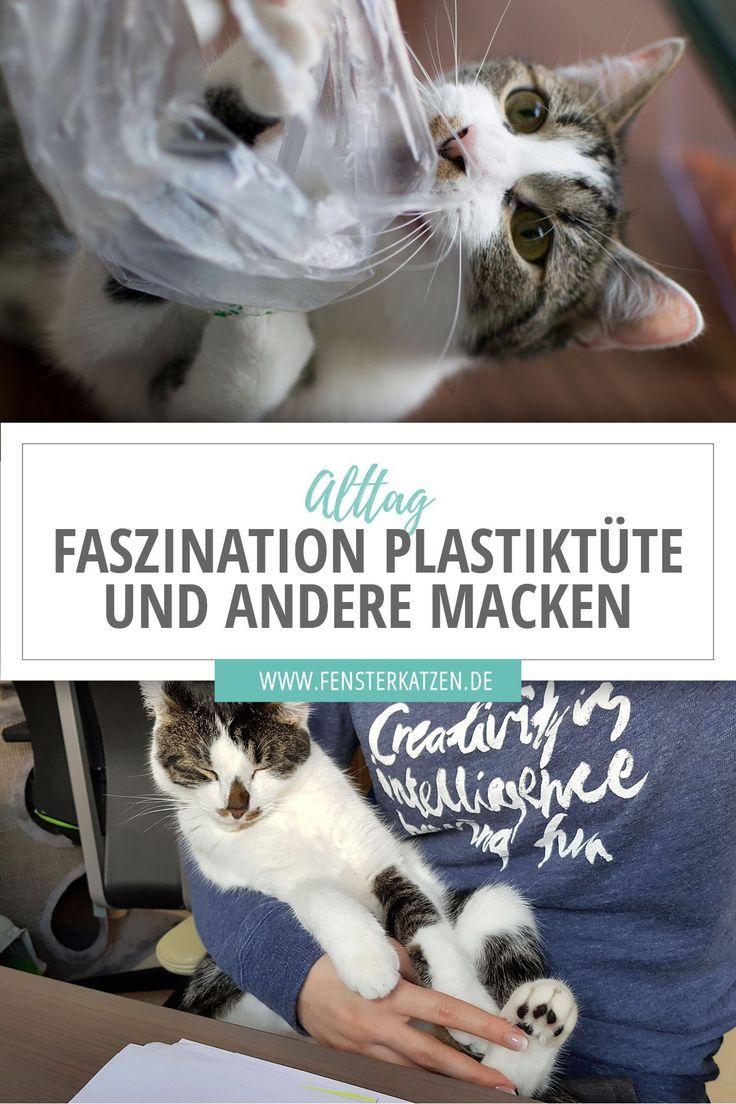 Faszination Plastiktute Und Andere Macken Alltag Lustig Tiere Katzenhaltung