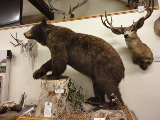 Durango Fish Hatchery and Wildlife Museum, Durango: See 155 reviews, articles, and 51 photos of Durango Fish Hatchery and Wildlife Museum, ranked No.12 on TripAdvisor among 74 attractions in Durango.