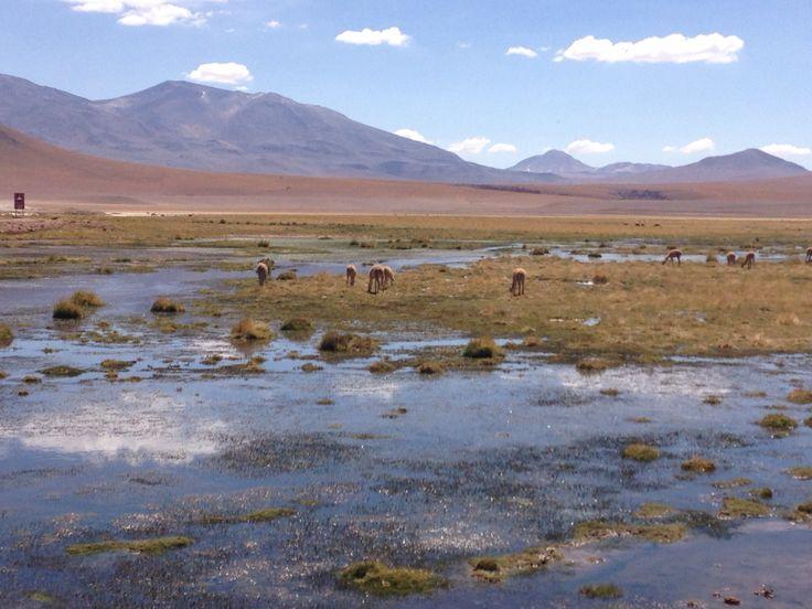 Humedal, Machuca, El Tatio, San Pedro de Atacama