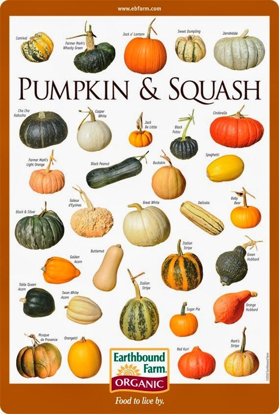 Alternative Gardning: Pumpkin & Squash Varieties Chart