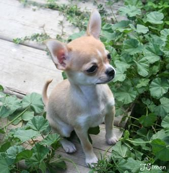 Hey, what's going on over there? Chihuahua