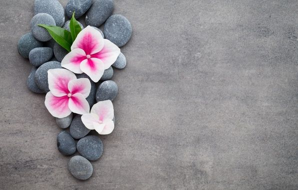 Photo wallpaper flowers, stones, flower, orchid, spa ...