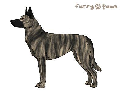 Furry Paws // WCH Kip's Vienna von Fuku [18HH 1.447] 13.3 *BoB*'s Kennel