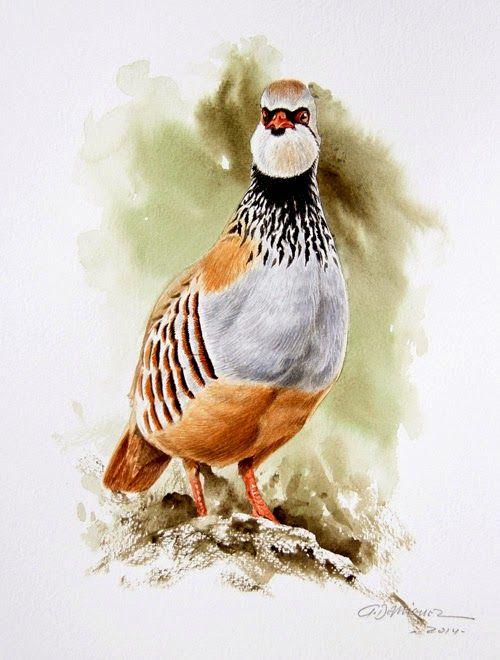 El pintor y la Naturaleza - Wildlife Art: noviembre 2014