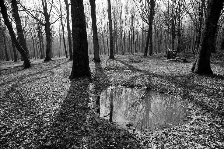 Corps Belleau Wood  in the cratered Belleau Wood, now named Bois de  ~ Bois De Belleau