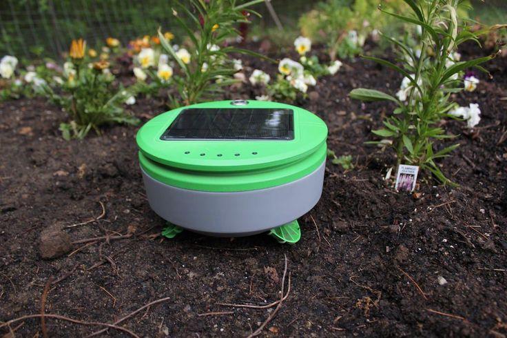 785 Best Garden Funky Images On Pinterest