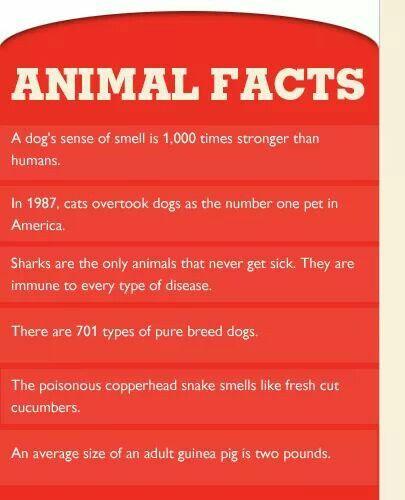 Science Teacher Job Facts: Veterinary Science