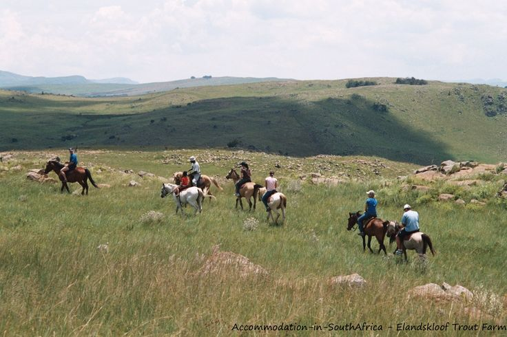 Horse riding at Elandskloof Trout Farm. http://www.accommodation-in-southafrica.co.za/Mpumalanga/Dullstroom/ElandskloofTroutFarm.aspx