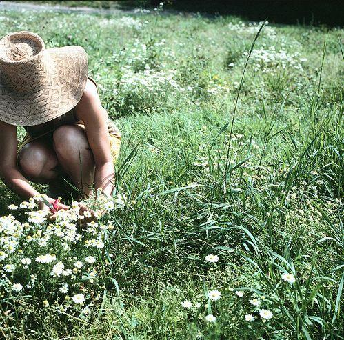 summer garden ~