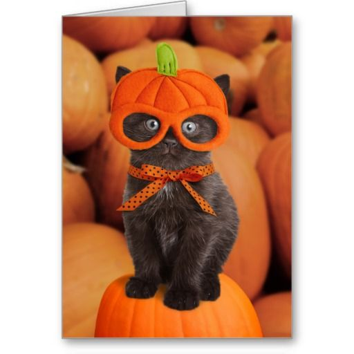 "Halloween card featuring a funny kitten wearing a pumpkin mask. See our matching apparel at our <a href=""http://www.zazzle.com/lamessegee""> Cat Card & Gift Shop</a>!"
