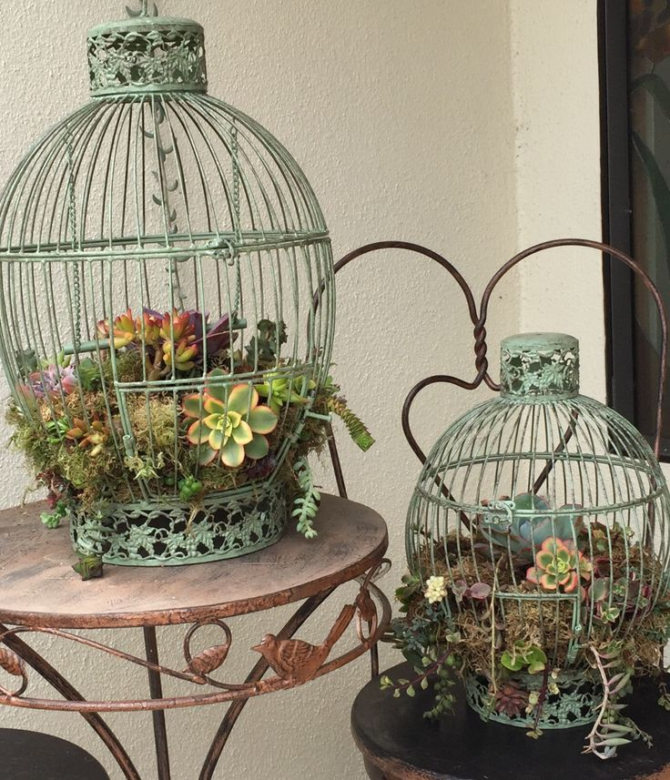 Bird Cage Planter: DIY Succulent Bird Cage Planter. I Found These Bird Cages