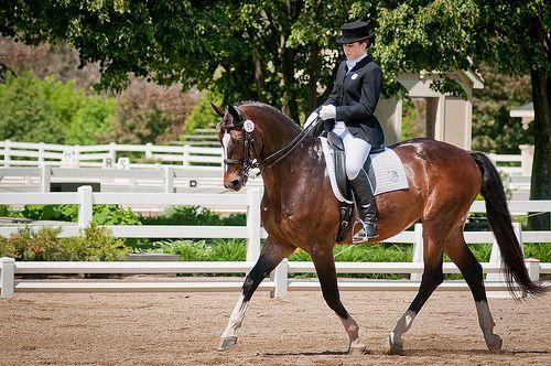 Horse training: 5 tips to create impulsion. Photo by Bob Haarmans