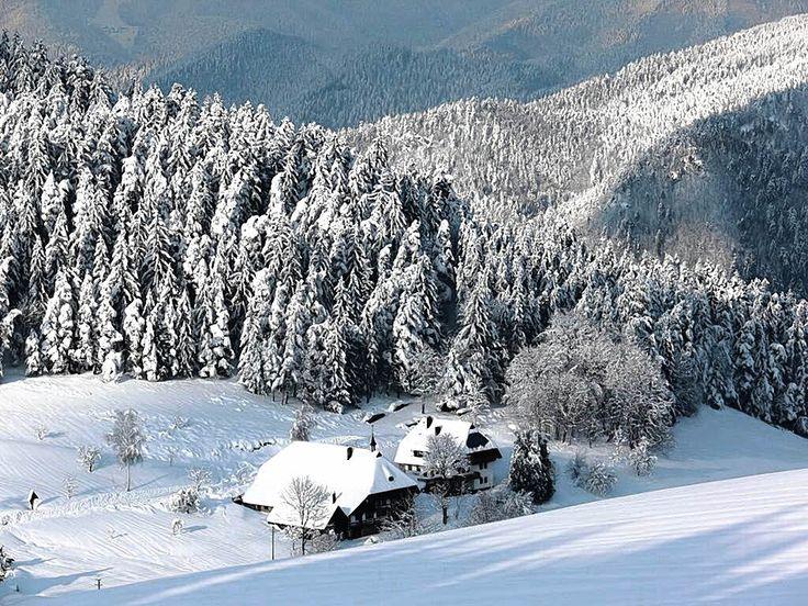 2012 - Foresta Nera - Germany