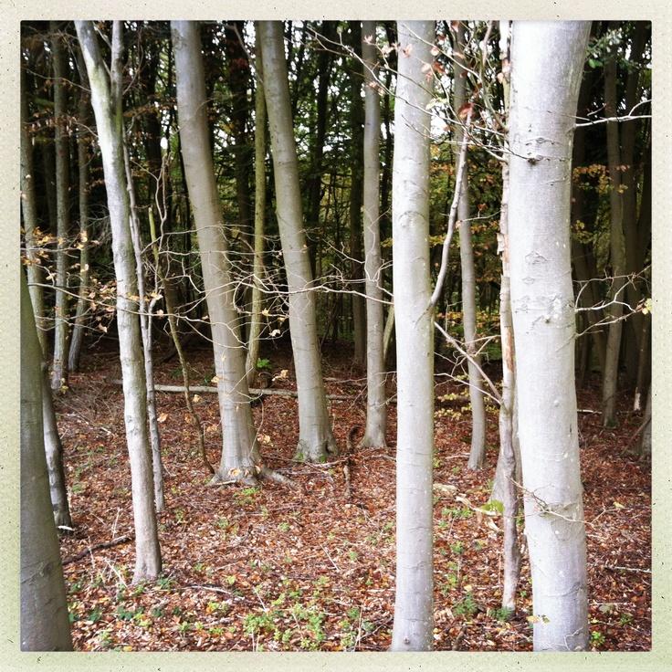 Woods near wolvercote, Oxford