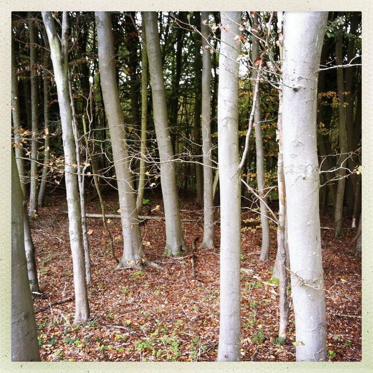 Woods near wolvercote, Oxford