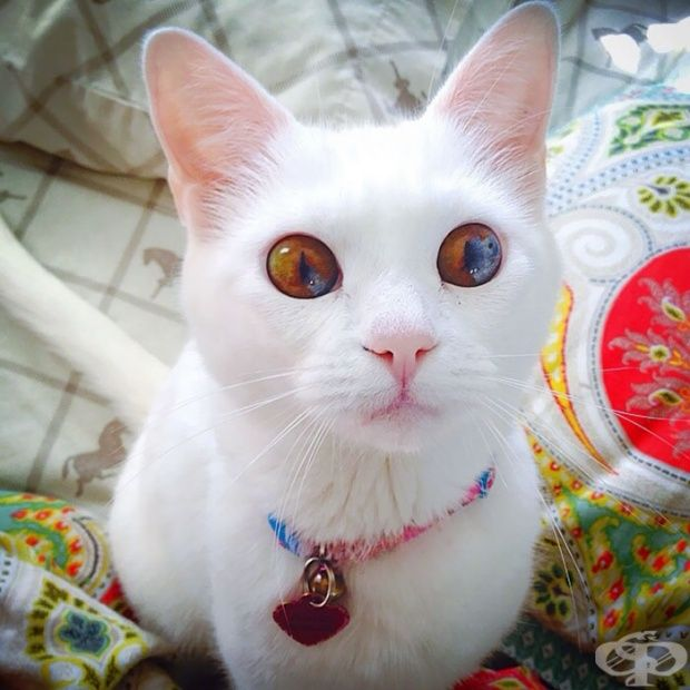 Mačiatko s očami vesmíru