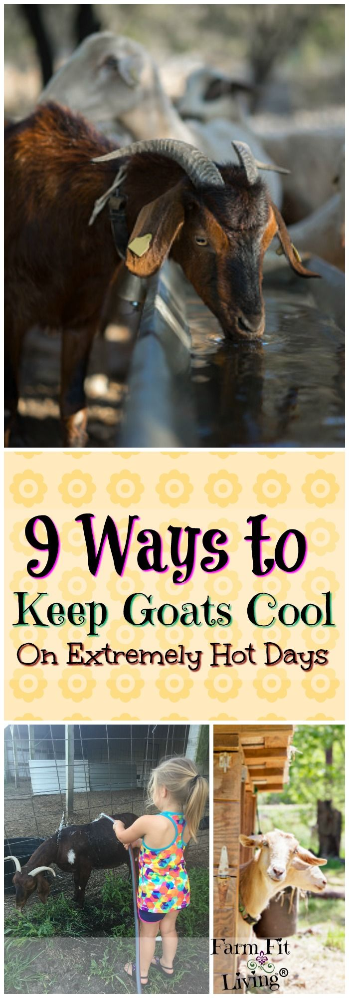 Are you looking for ways to keep goats cool during the scorching heat? Here are 9 great ways to cool your goats during the summer. via @www.pinterest.com/farmfitliving