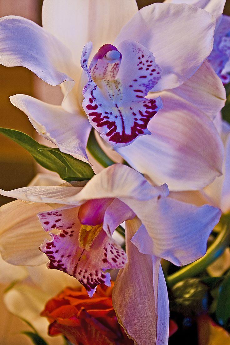 Kukka loimu - Flame white