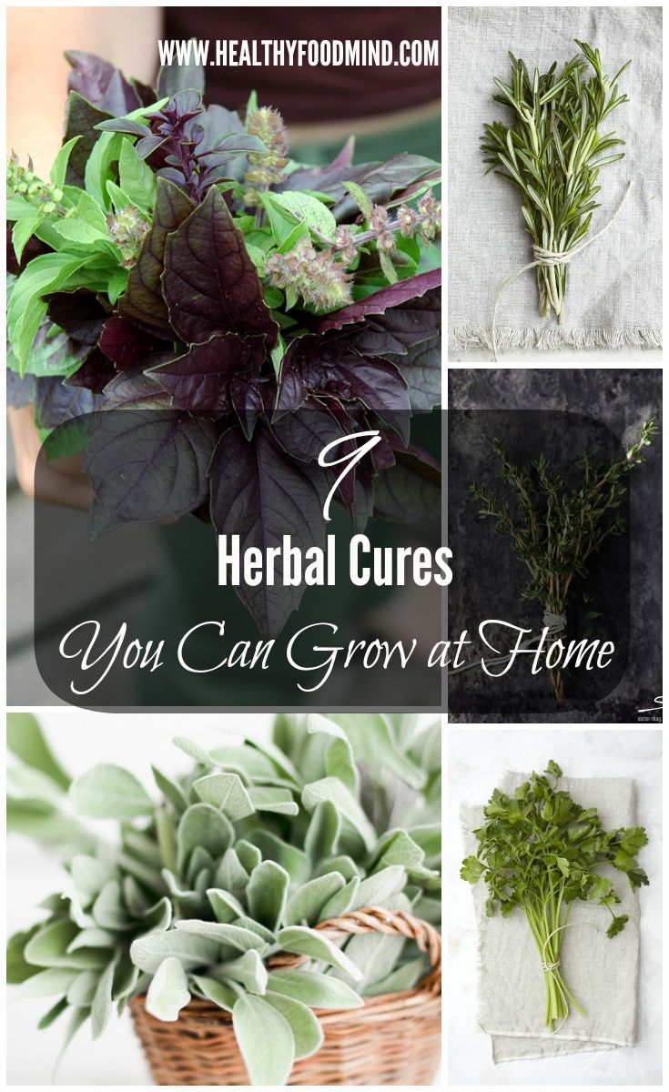 Before reaching for your wallet and going to the pharmacy consider that there are a lot of herb cures that can easily be grow at home.
