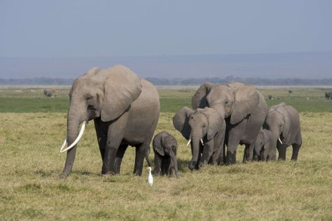 First-ever animal rights lawsuit filed on behalf of zooelephants