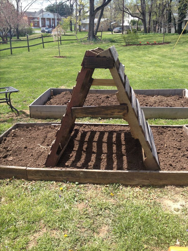 25 best ideas about cucumber trellis on pinterest for What to grow in a pallet garden