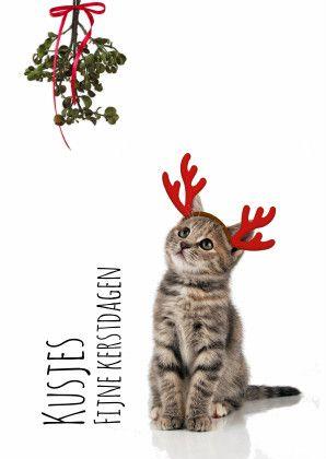 Wie wil er nu niet zo'n lieve, grappige, leuke kerstkaart ontvangen met een lief poesje en je kunt de tekst op voor- en binnenzijde aanpassen!  Te vinden op: www.kaartje2go.nl  Maak jouw eerste kaart op onze website nu gratis!
