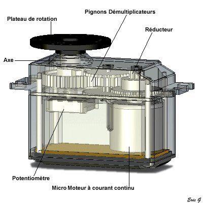 Une vue interne d'un servo-moteur (sans l'électronique de commande)