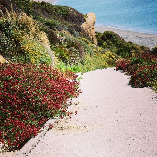 Path to the beach. Will you follow it to find the treasure at the end?
