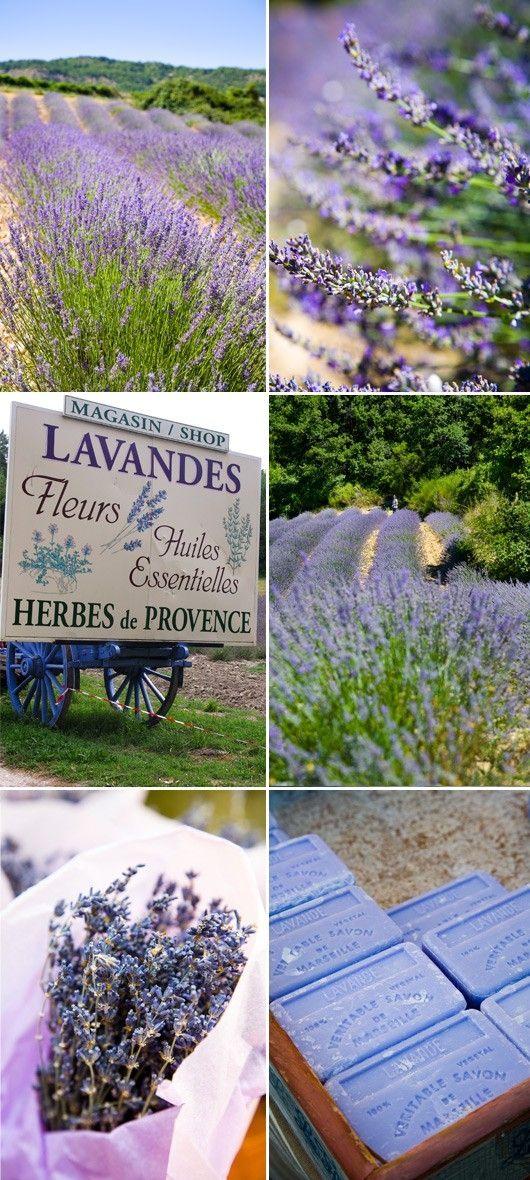 Bildergebnis für Lavender in france moodboard