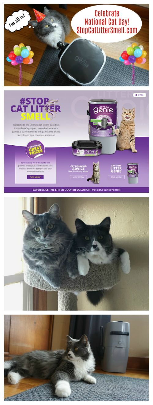 Check out the new Stop Litter Smell web site! You can enter for a chance to win prizes and check out the fun cat content! AD #StopCatLitterSmell