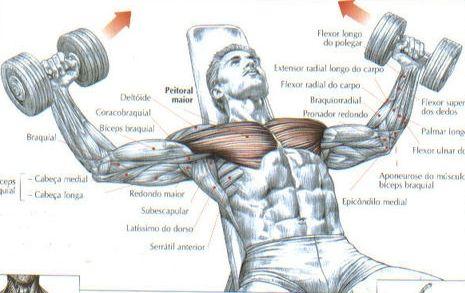 Flexão-adução horizontal dos ombros, inclinado, com halteres:   Este movimento não deve ser realizado pesadamente. Ele localiza o esforço sobre os peitorais, principalmente sobre a sua parte clavicular. Faz parte, junto com o pull-over, dos exercícios fundamentais para o desenvolvimento de uma boa expansão torácica.