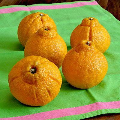 Sumo Mandarin is the best orange I have ever eaten.