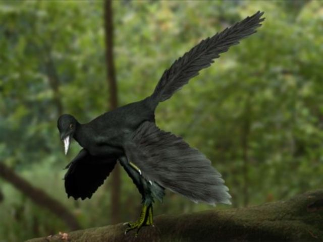 10 Facts About Archaeopteryx, the World's Most Famous Dino-Bird: Fact #7 - Archaeopteryx Was as Much Dinosaur as Bird