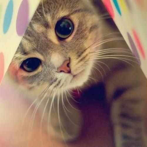 あなたの猫ちゃんの名前は入ってる(・∀・)??猫ちゃんの人気の名前ランキング♡ - mofmo