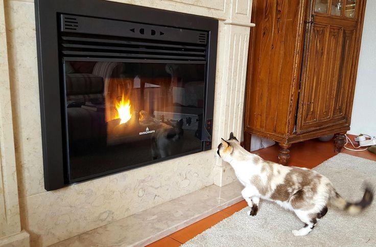 Neva | Pellet | Cat