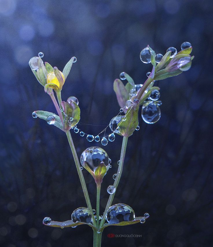 Pin by Eve Timmins on Macro Photography (With images