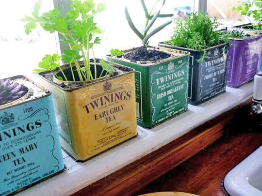herbs in tea tins. I could do this with Teaopia tins!