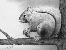pencil drawings of nature - Google Search