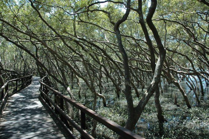 Wynnum Mangrove Boardwalk Crown St Wynnum