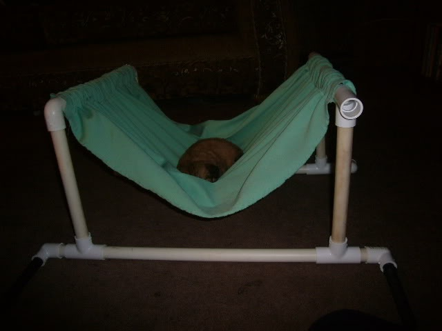 Cuddly hammock for my little puppy - HOME SWEET HOME