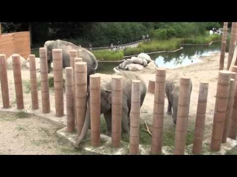 Norman Foster Elephant House in Copenhagen Zoo
