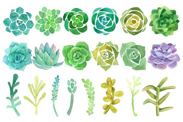 Watercolor cactus and succulent set - Objects - 2