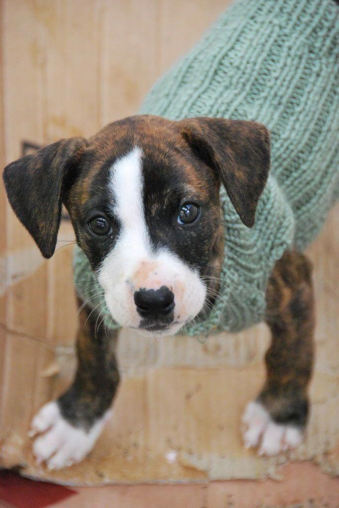 Train Your Dog To Go Potty In One Spot Dogtrainingideas Training Your Dog Aggressive Dog Dog Behavior