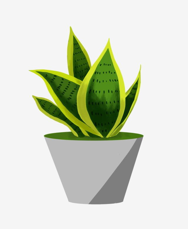 Green Pot Gray Flower Pot Hand Drawn Potted Illustration Beautiful Potted Plant Flower Pot Clipart Potted Illustration Hand Painted Plant Pot Png Transparent Plant Sketches Plant Drawing Plant Painting