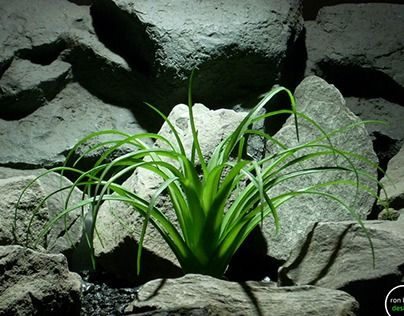 """Check out new work on my @Behance portfolio: """"reptile plant: ponytail palm from ron beck designs."""" http://be.net/gallery/48639399/reptile-plant-ponytail-palm-from-ron-beck-designs  #ronbeckdesigns #gotplants? #aquarium #reptile #plants #terrarium"""