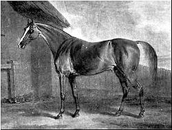 "Potoooooooo, famous 18th-century Thoroughbred racehorse who defeated some of the greatest racehorses and later became an influential sire - his name was originally ""potatoes,"" and his owner, willoughby bertie, told the stable lad who helped him to write the horse's name on a feed bin. the boy misheard it as, literally ""pot-eight-o's"" and wrote it with 8 o's. bertie found it so funny that he kept that as the horses name."