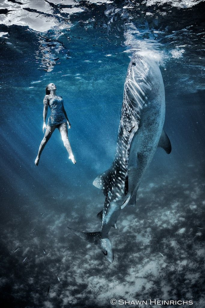 In an effort to raise awareness about conservation and the environment, marine life photographer Shawn Heinrichs collaborated with fashion photographer Kristian Schmidt on this completely awe-inspiring underwater project. The images feature enchanting combinations where human models swim in sync with whale sharks