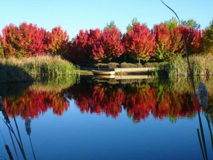 Redbrow gardens Canberra