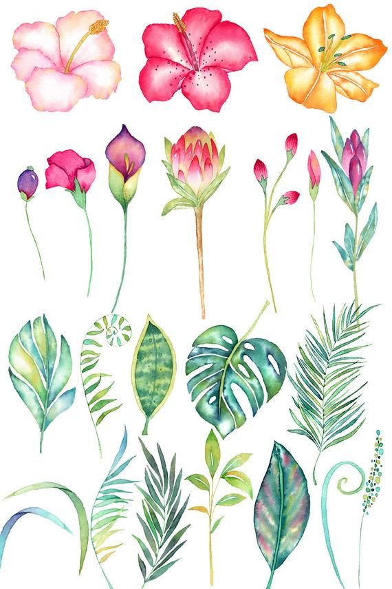 Watercolor Tropical Clipart Vector Watercolor Flower Pink Flower Drawing Watercolor Flowers Flower Painting